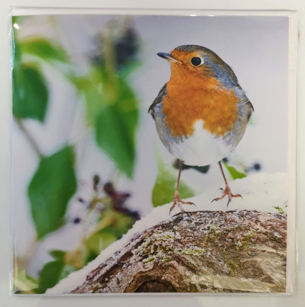 Card - European Robin